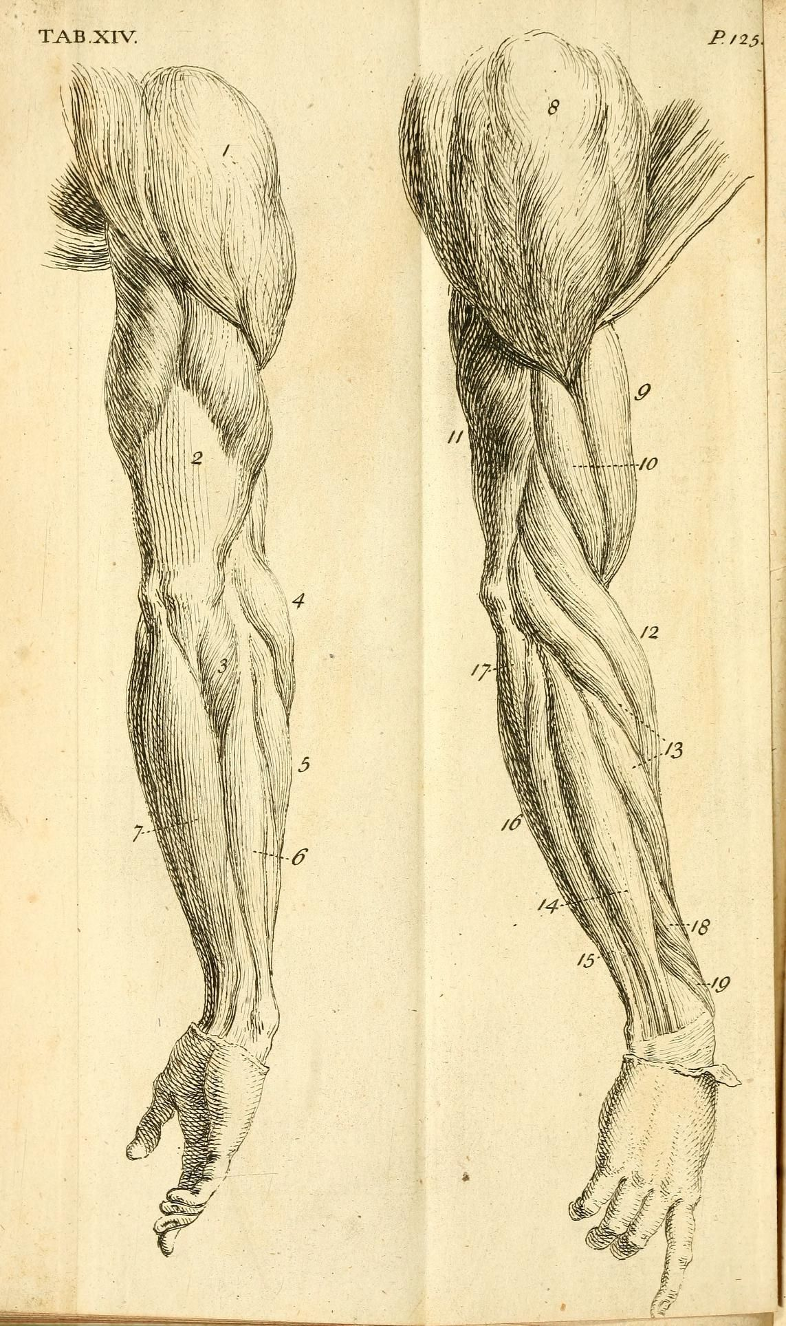 Pin de Jules Caron en Academic | Pinterest | Anatomía, Tipos de ...