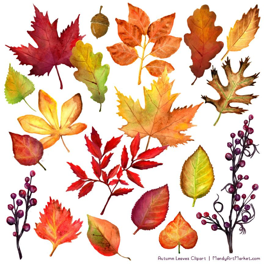 Free Watercolor Leaves Clipart For Fall Fall Leaves Drawing