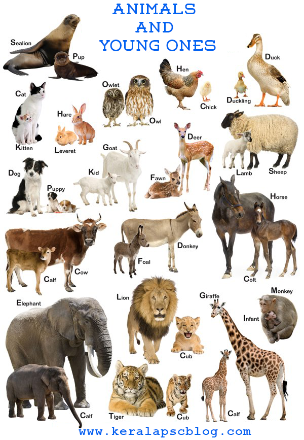 Animals+and+Young+Ones.png (600×867) (With images) Young