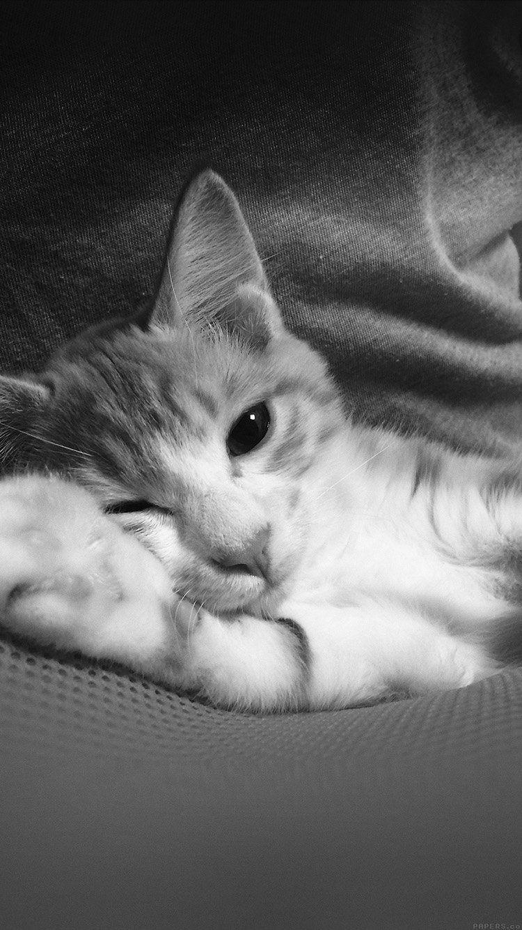 Epingle Par Staffyprod Sur Wallpaper Iphone Cat Animaux Les Plus
