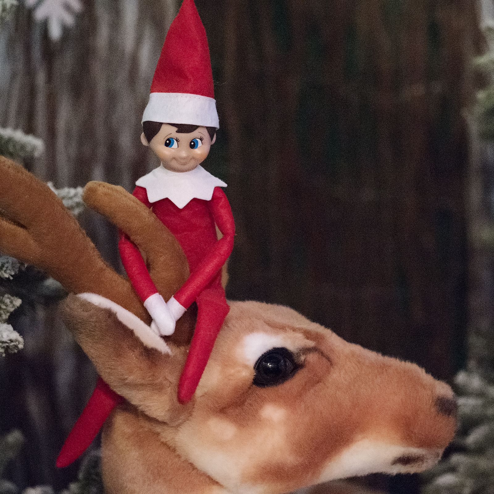Riding through the forest on one of the reindeer Elf on the shelf