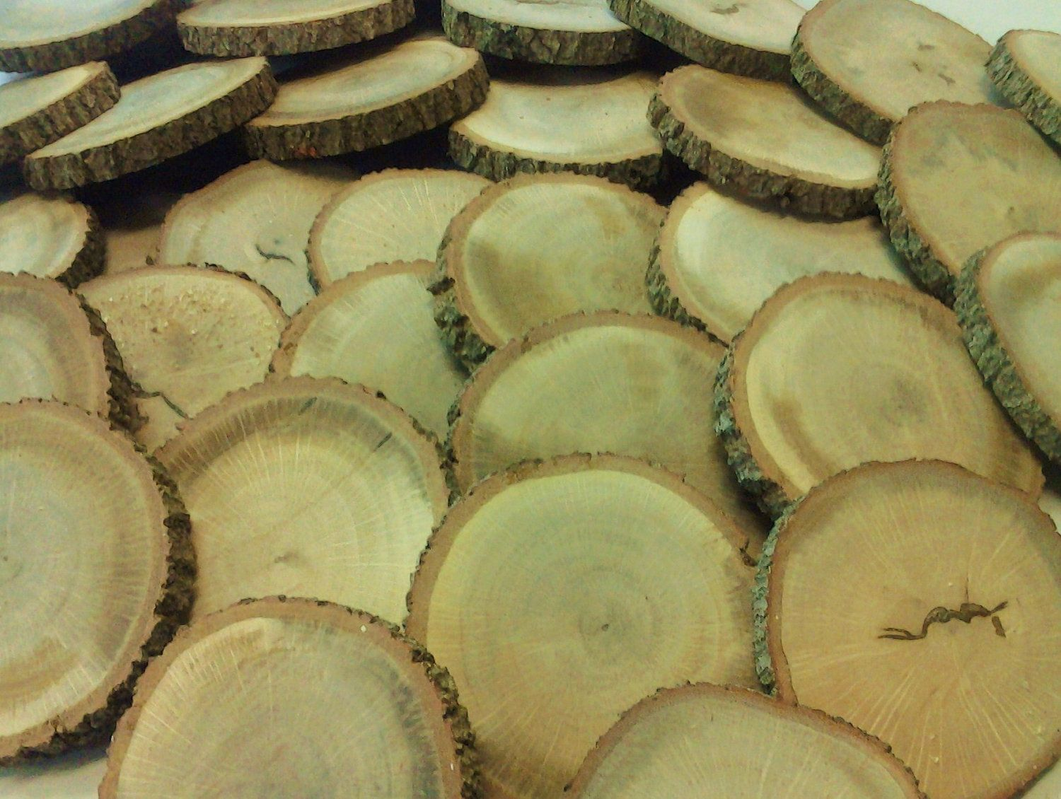 Large set of natural oak tree discs for crafts diy projects