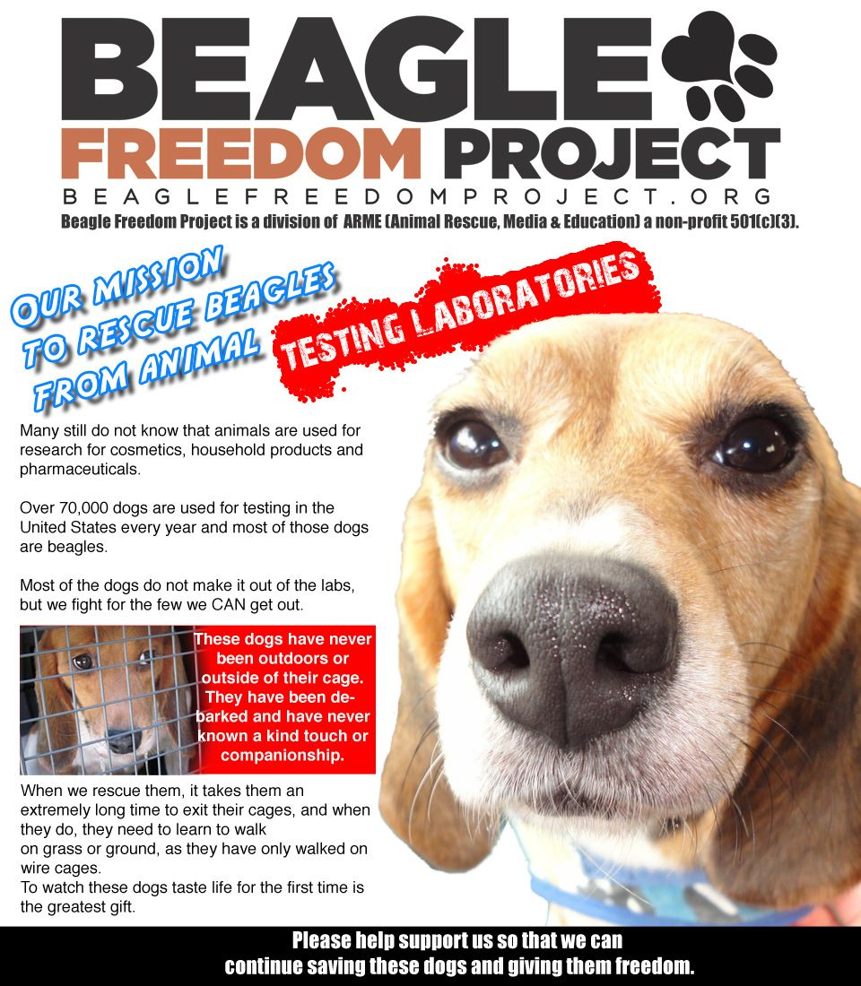 Beagle Freedom Project Beagle Freedom Project Beagle Therapy
