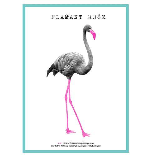 Flamant - Affiches décoratives-Affiches, Déco murale Image laminée glossy 70x50cm