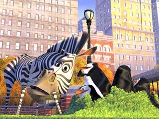 Marty  - marty-the-zebra Photo