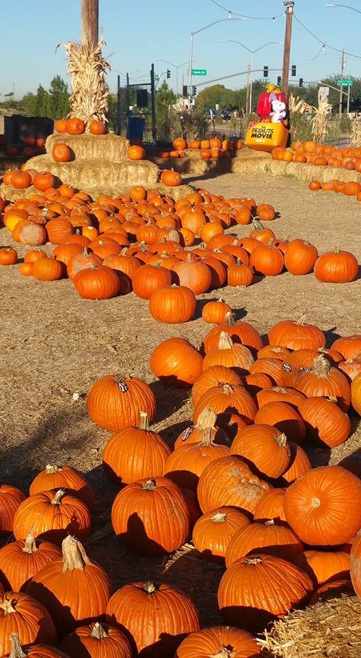 These 11 Charming Pumpkin Patches In Arizona Are Picture