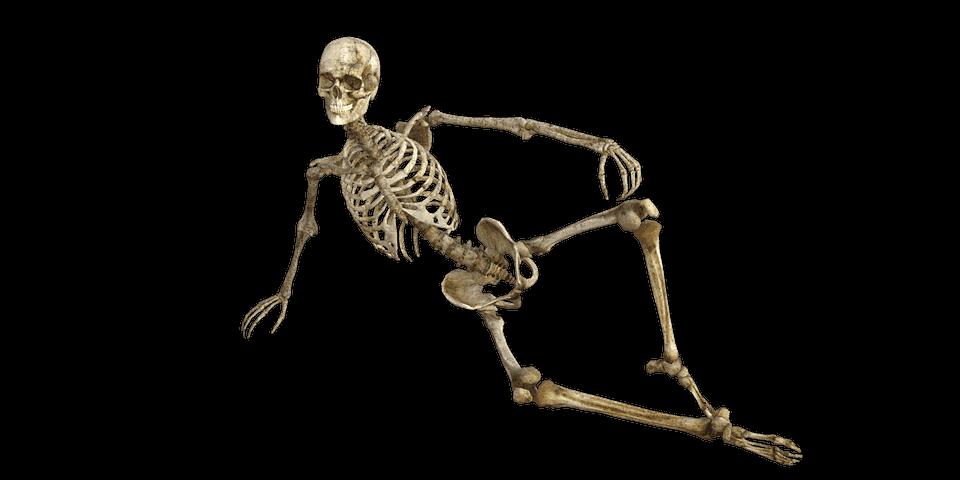 Anatomía - Definición, como se estudia, términos anatómicos y planos ...