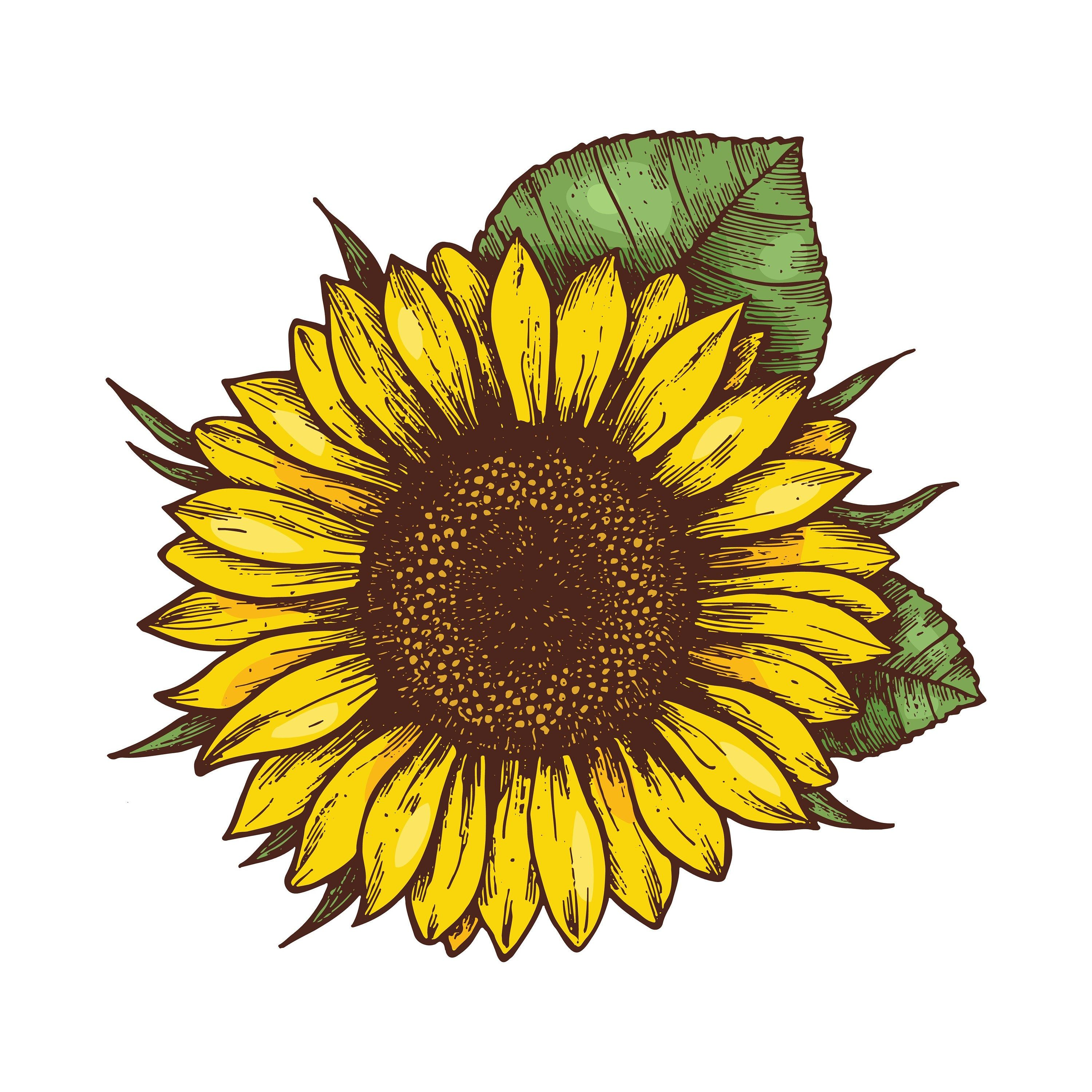 SunFlower PNG File, T-Shirt Graphics, Sunflower Clipart, Spring Flower PNG,  Summer Flower PNG in 2021   Sunflower drawing, Sunflower illustration, Sunflower  clipart