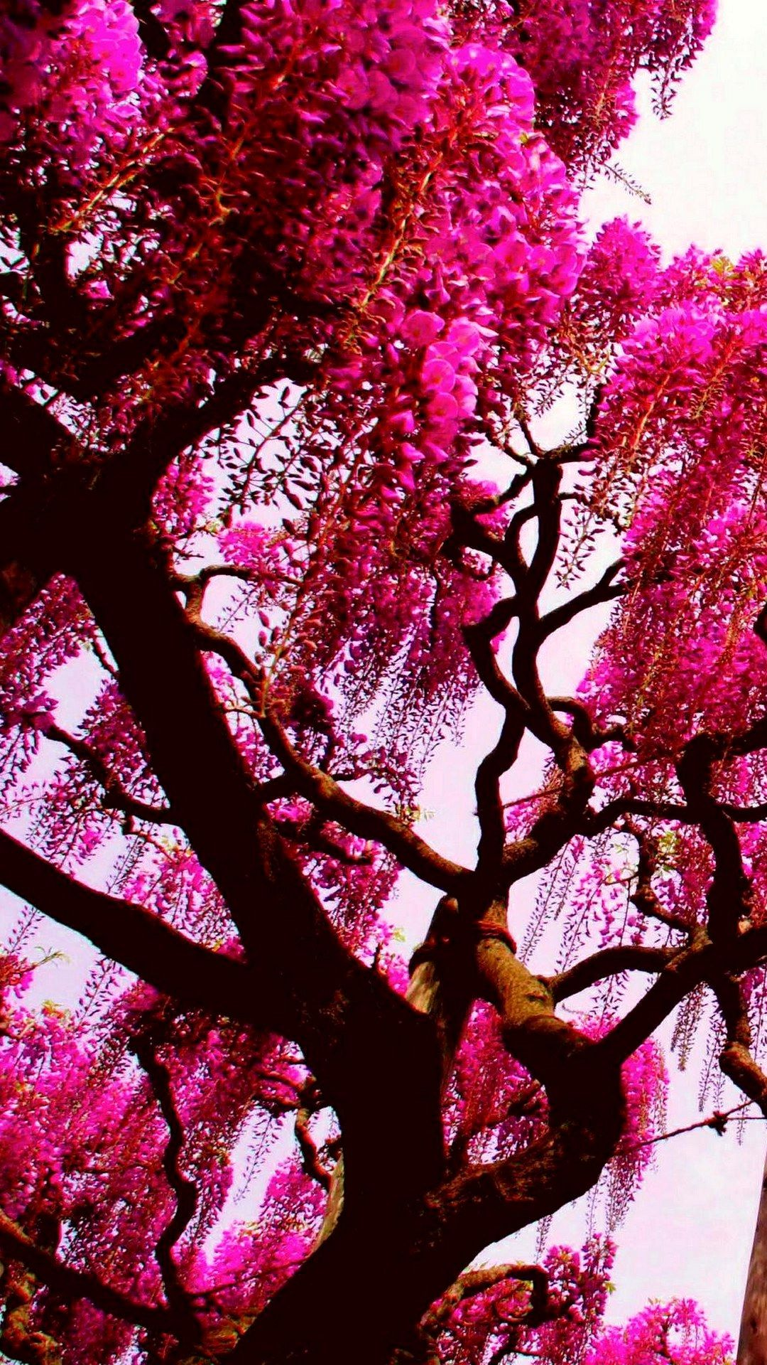 Full Hd Pink Nature Wallpaper