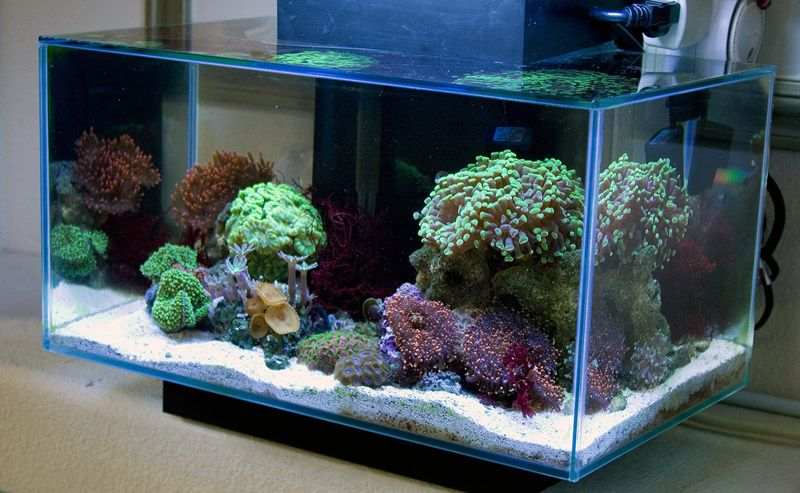 Fluval edge nano reef for Aquarium nano marin