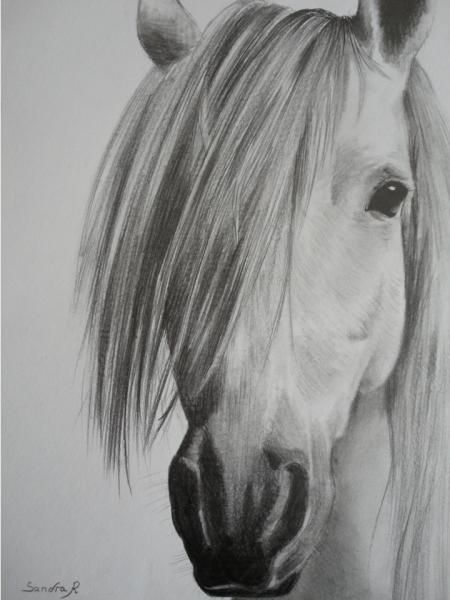 Portrait d 39 un cheval crayon graphite dessin dessin - Dessin facile de cheval ...