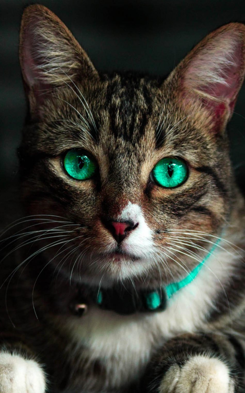 Green Eyed Cat 4k Ultra Hd Mobile Wallpaper Green Eyed Cat Animals Baby Cats