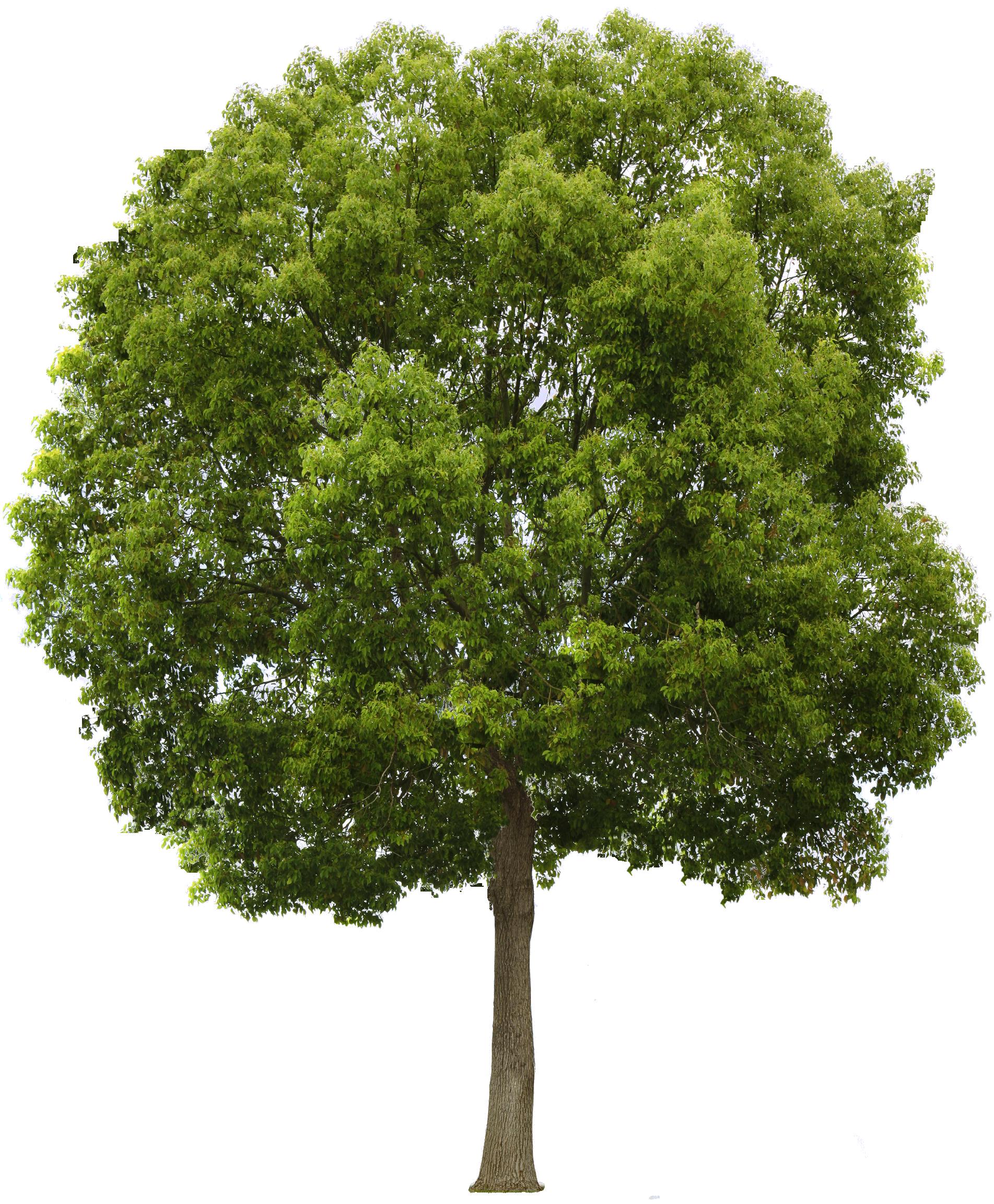 Image result for tree | MI 377 Final | Pinterest | Master plan ... for Park Tree Png  55nar