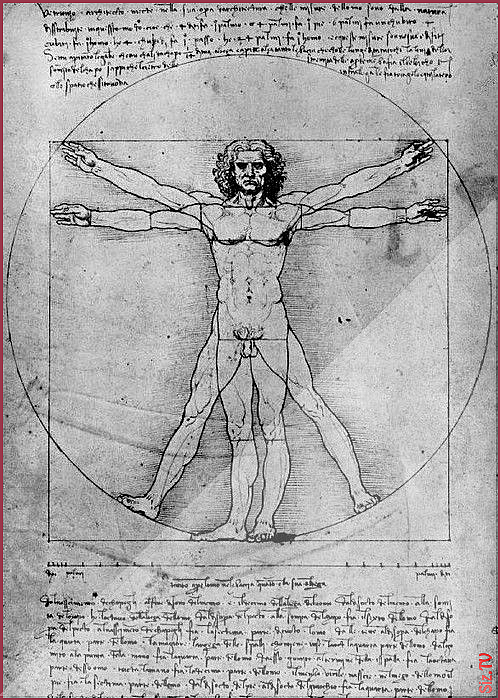 The Proportions Of The Human Figure The Vitruvian Man The Proportions Of The Human Figure The Vitruvian Man Kata Kayo Katakayo Vitruvian Man Human Figure Human