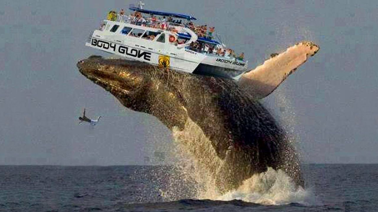 World's Biggest Animal 2016 Video, Histoire
