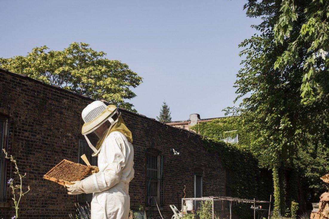 Bee Bop Honey