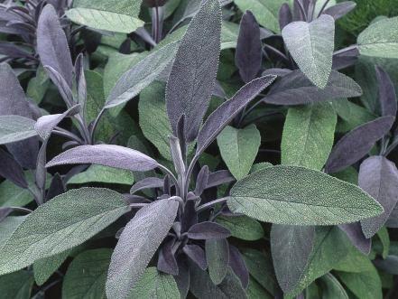 Grow Your Own Kitchen Countertop Herb Garden Types Of 400 x 300