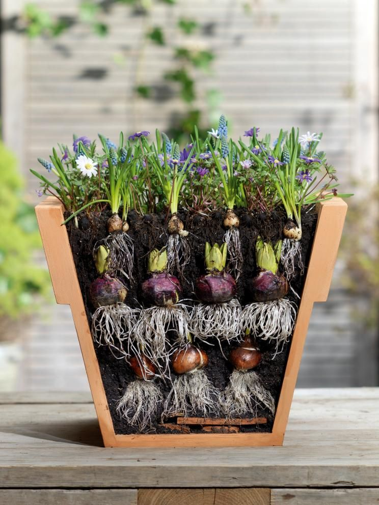 10 Tipps Rund Um Blumenzwiebeln Garten Garten Garten Pflanzen