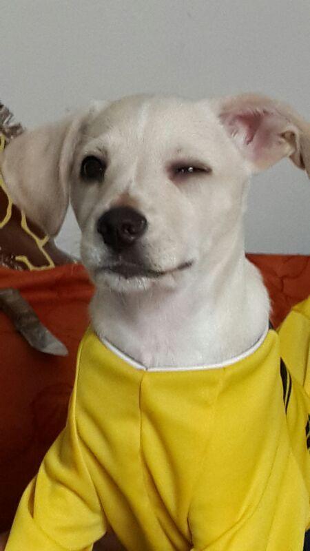 mi cachorrito tomy, con su camisa de Colombia!