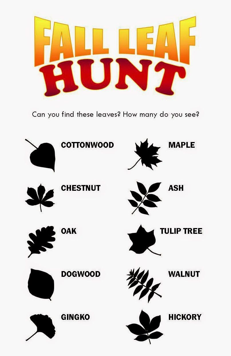 free printable for a fall leaf scavenger hunt fall pinterest