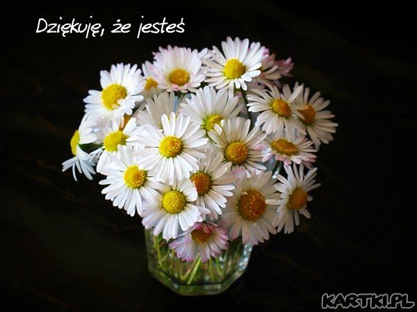 Dziekuje Ze Jestes Colorful Flowers Flowers Thankful