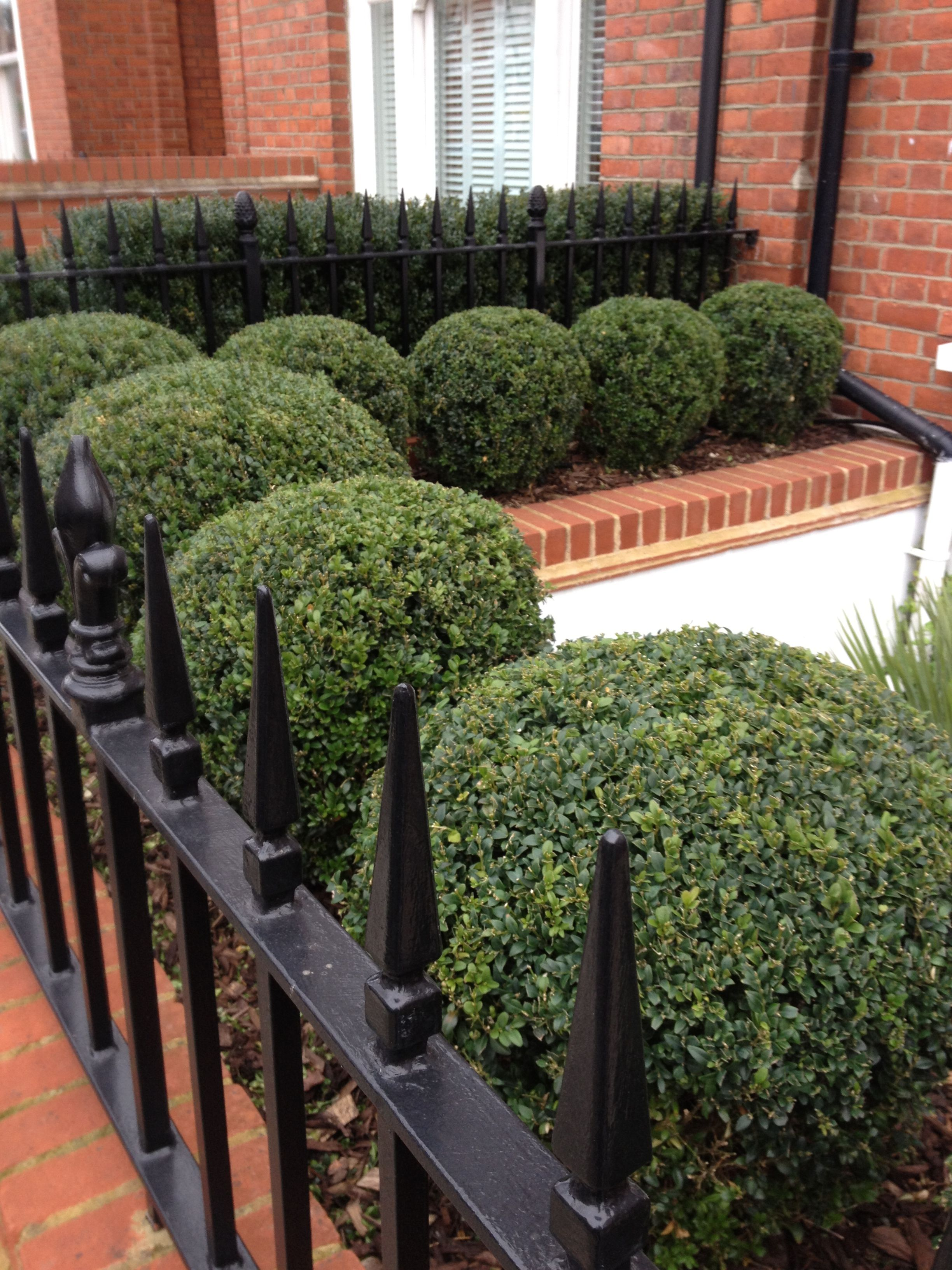 London front garden great idea for a town terraced house for Terraced house garden ideas
