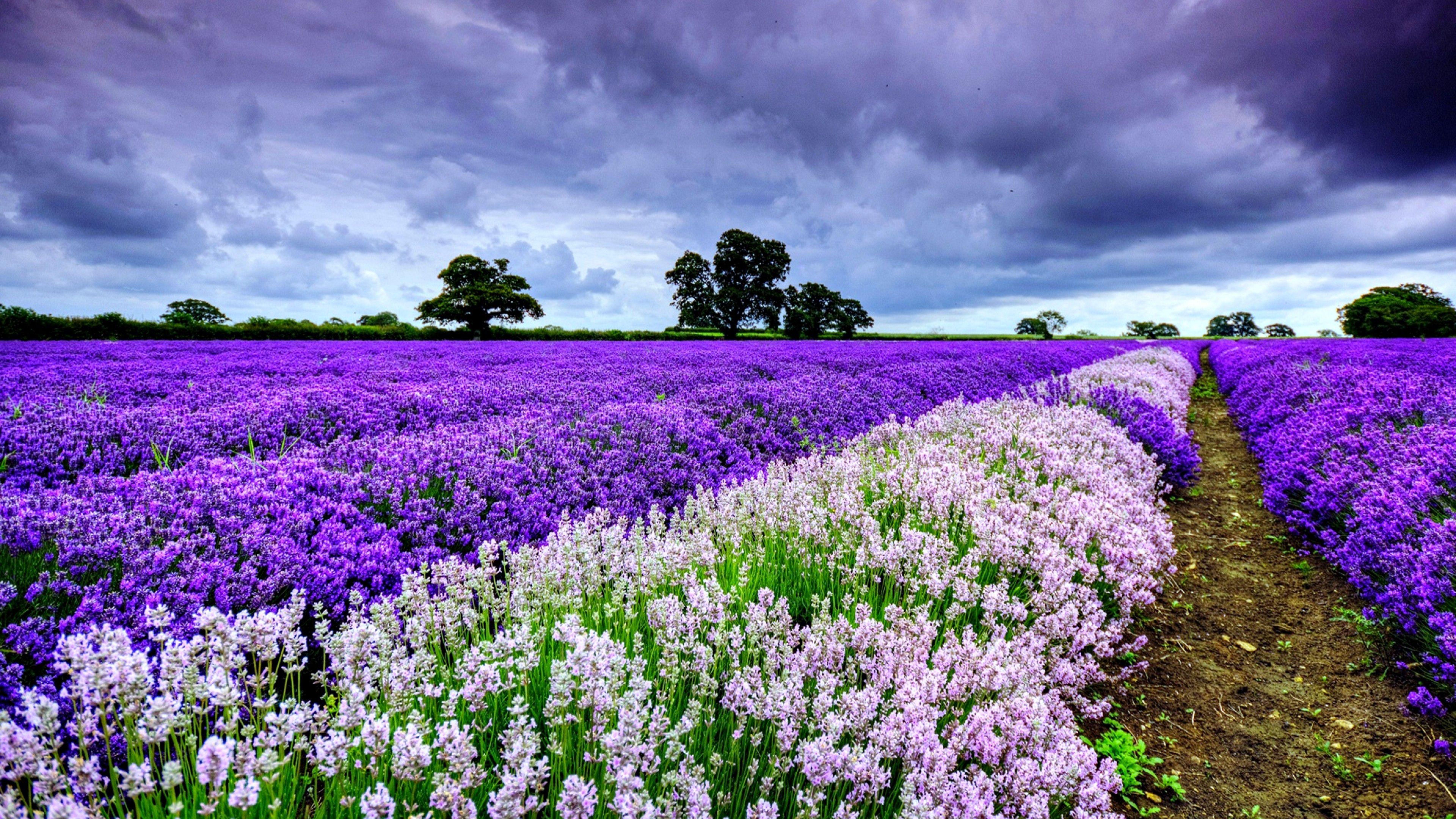 7680x4320 4k Ultra Hd Nature Flower Wallpaper Spring Landscape Field Wallpaper Spring Flowers Wallpaper