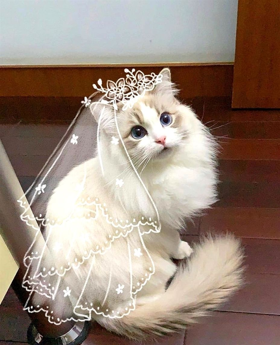Cat Pets Gorgeous Cats Cute Animals Cute Cats