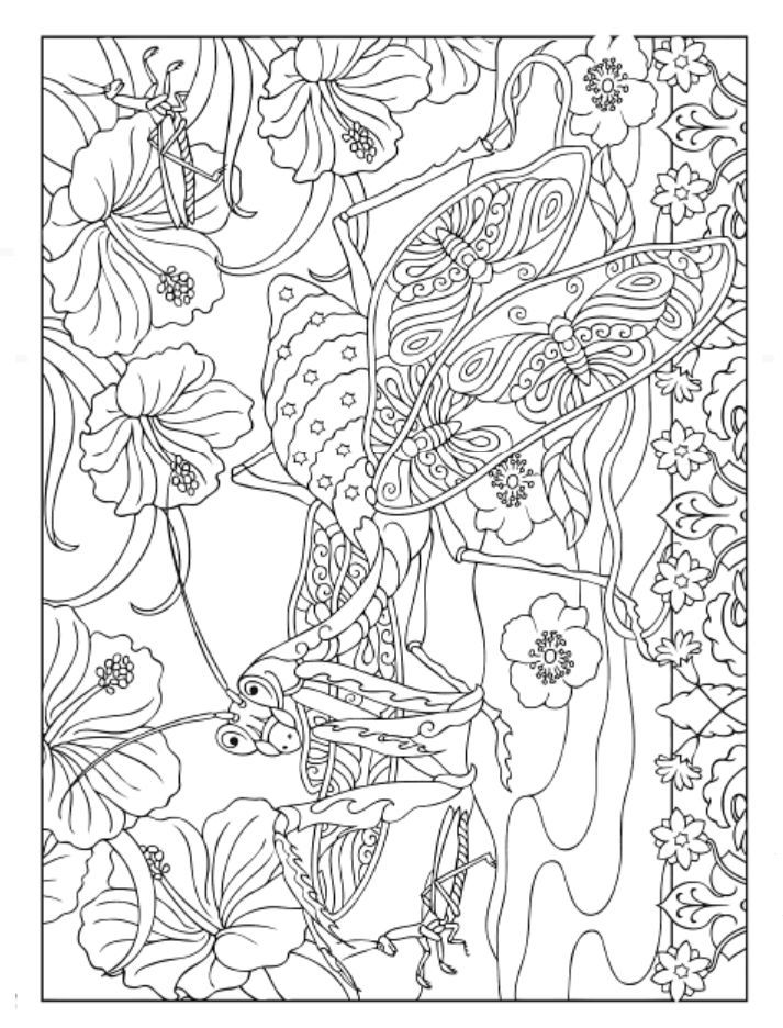 creative haven incredible insect designs coloring book dover publications - Dover Coloring Books For Adults