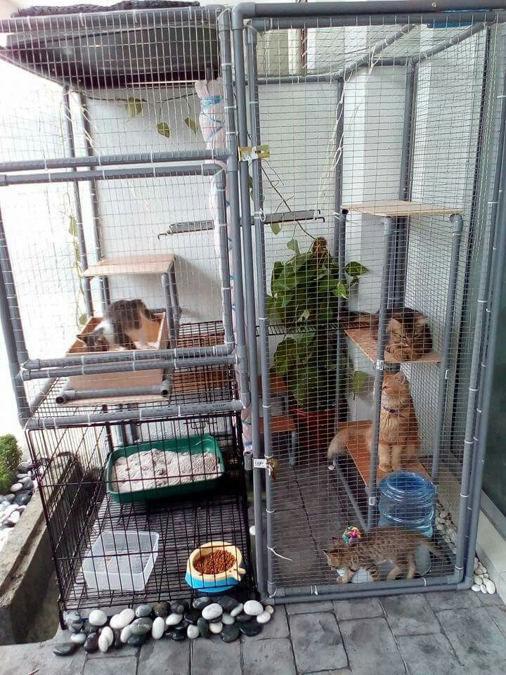 Pin By Evelyn Hoffmann On Cat Hauz Diy Cat Enclosure Outdoor Cat Cage Cat Patio