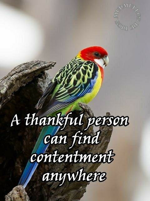 Quotes About Birds Pinmartha Lujan On Birds  Pinterest  Positive Phrases