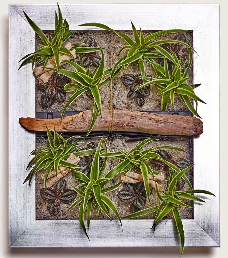 lebende pflanzen an der wand entdecken sie nat rliche. Black Bedroom Furniture Sets. Home Design Ideas