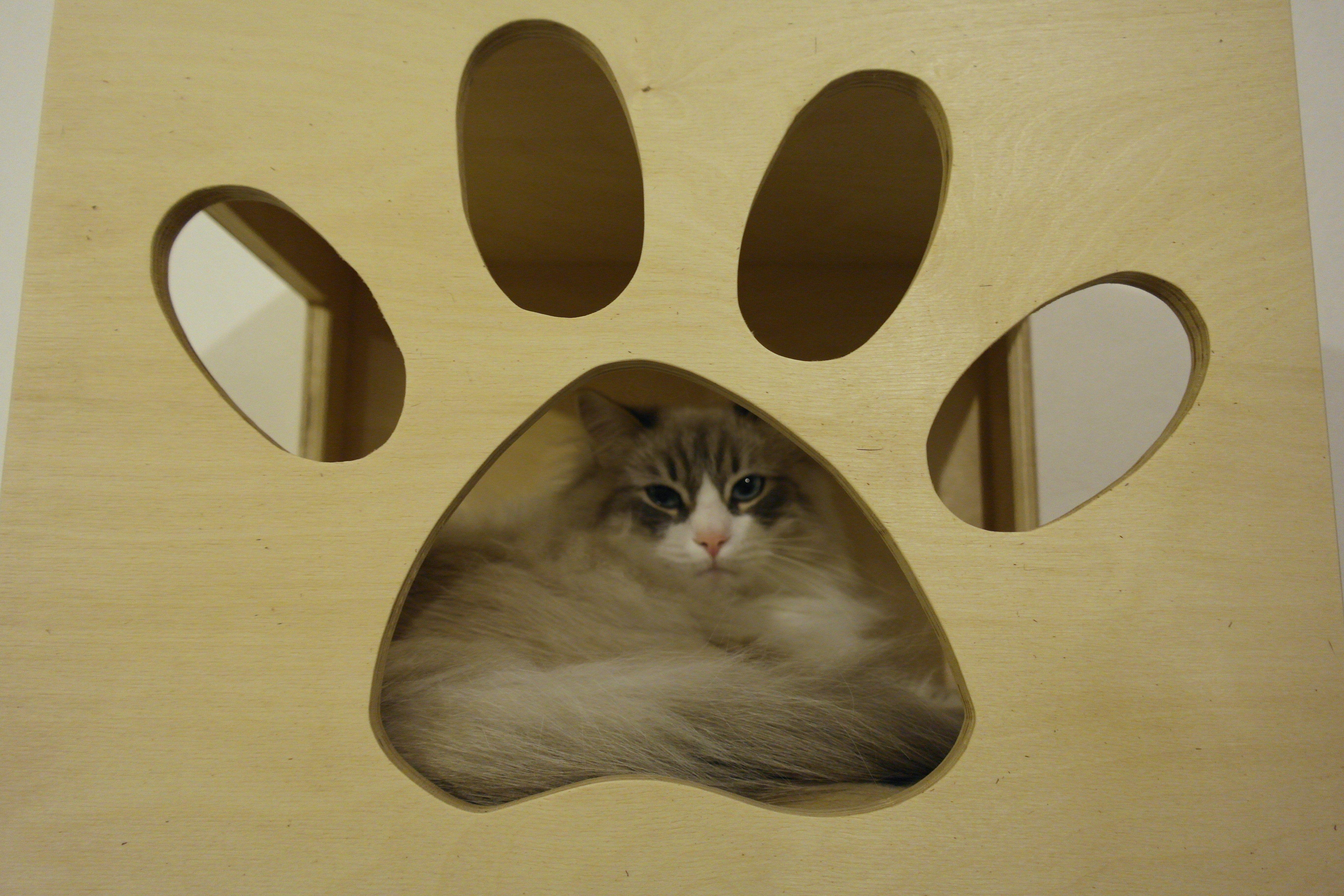 Cubi Per Creare Pareti Attrezzate Per Gatti Cubi Da Parete