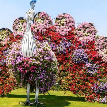 Así es el Dubai Miracle Garden, el jardín de flores más grande del ...