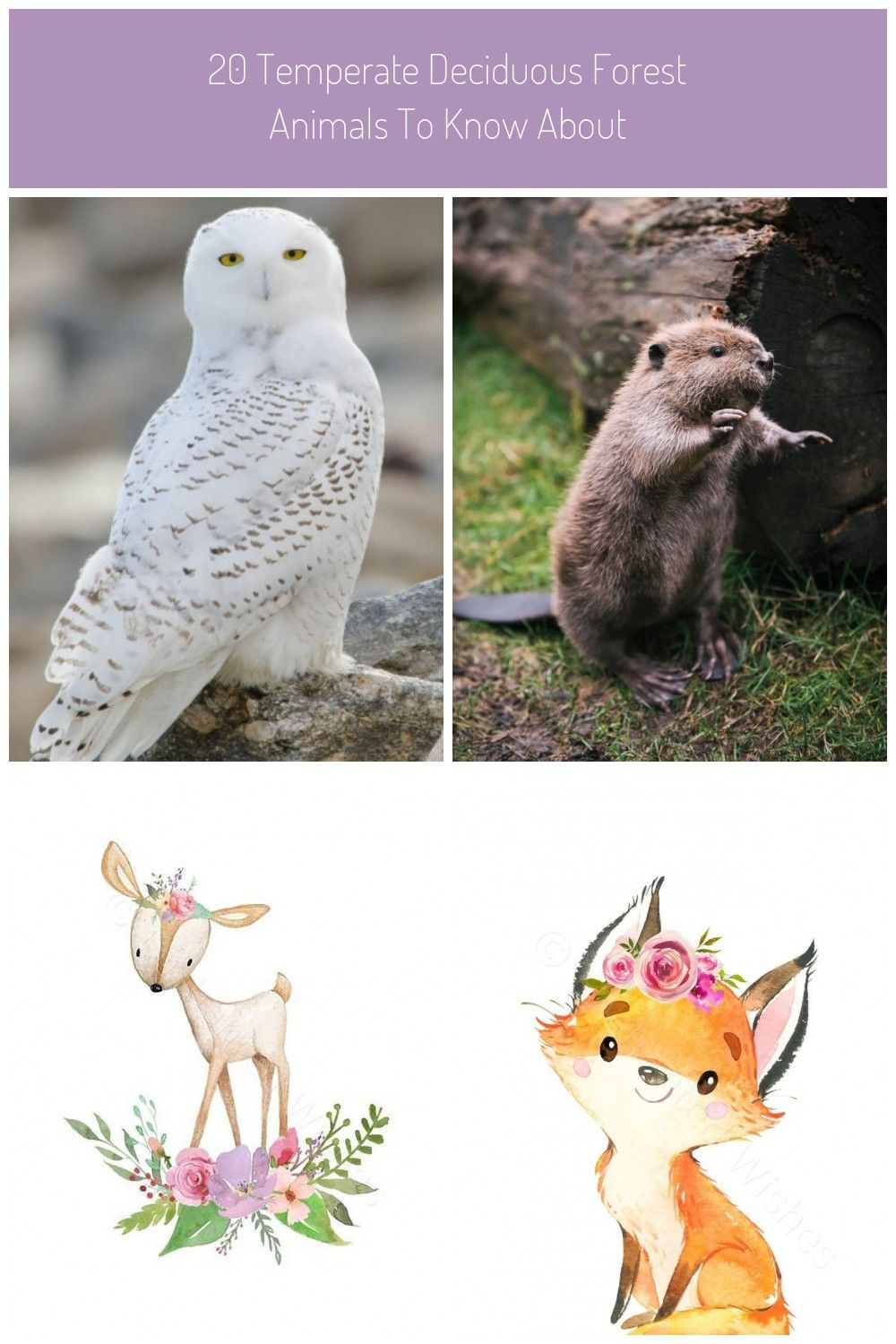20 Temperate Deciduous Forest Animals To Know About (With