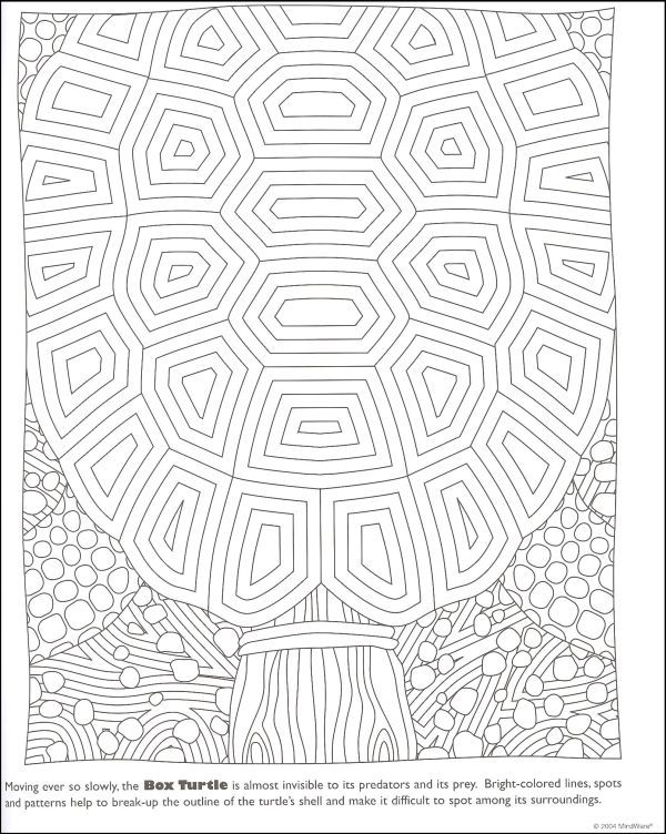 mindware hidden scales and shells google search coloring pages