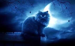Resultado de imagen de dama de la noche