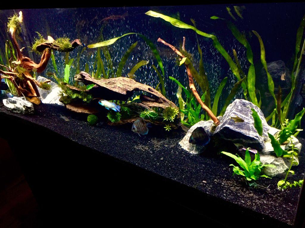 for Black sand fish tank