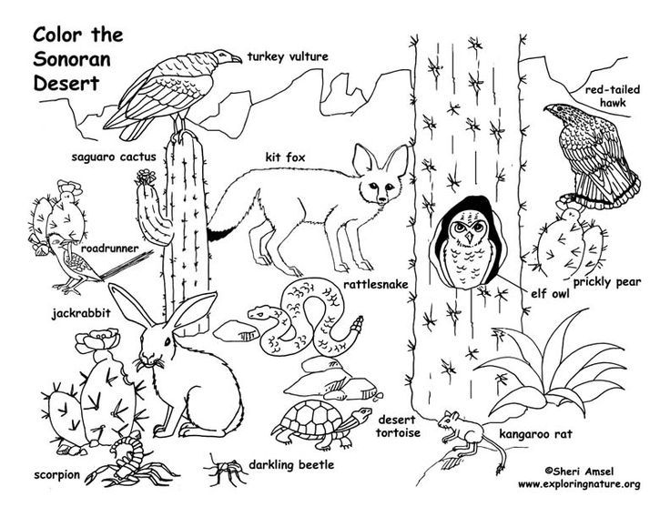 Desert Animals Coloring Pages Free Online Printable Coloring Pages Sheets For Kids Get The Latest Free Desert Animals Coloring Pages Images