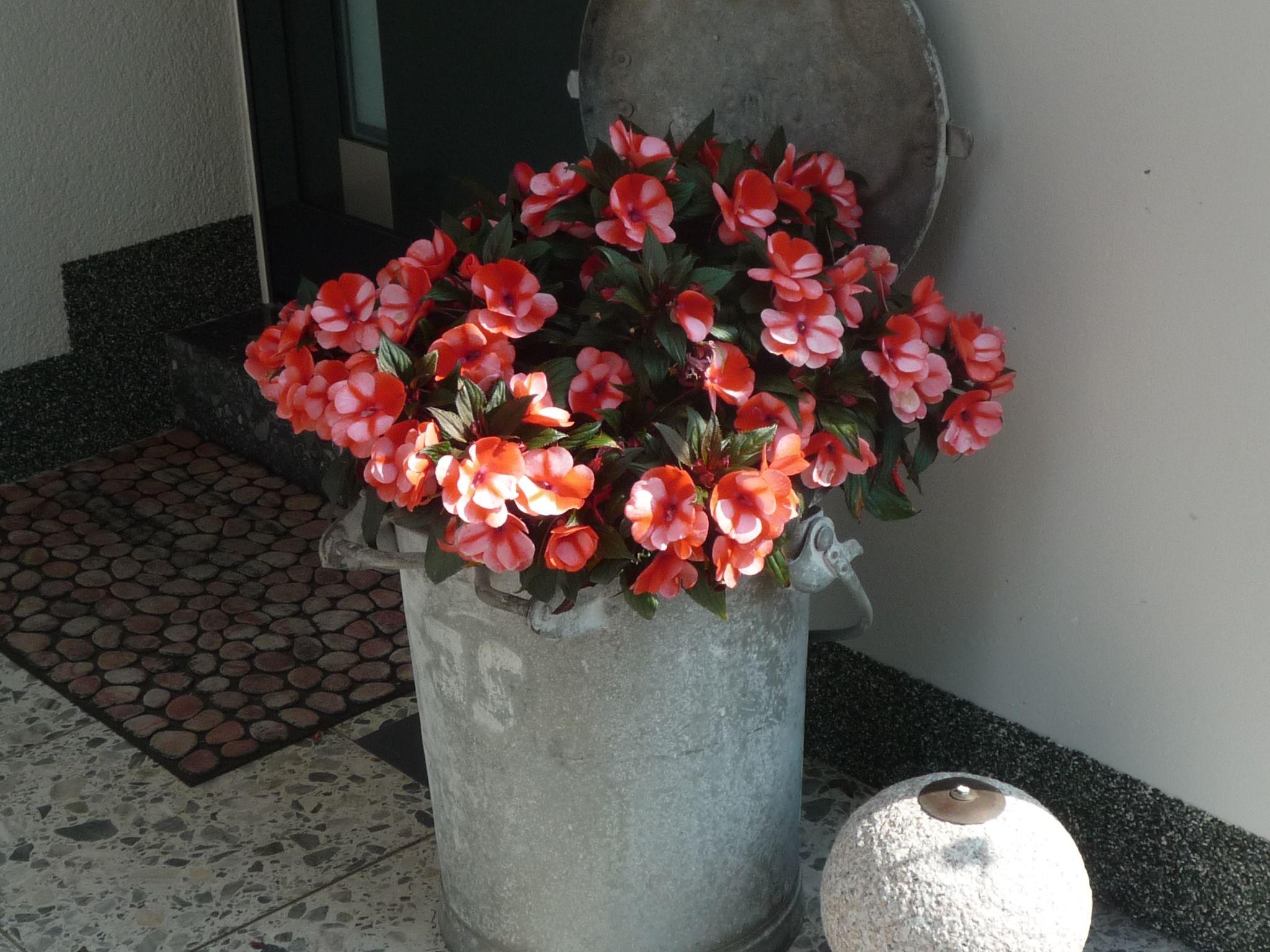 Schöne Blumen Blumen Garten Pinterest Schöne Blumen Blumen