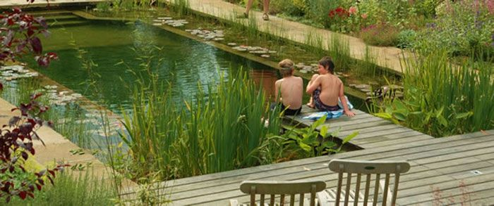Your Natural Pool Or Swimming Pond Is Also A Fine Environment For