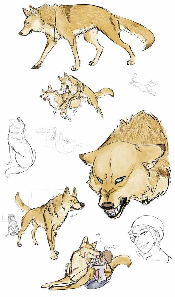 Dog draw #DogDrawing | Dog Drawing | Pinterest | Lobos, Dibujo y Bocetos