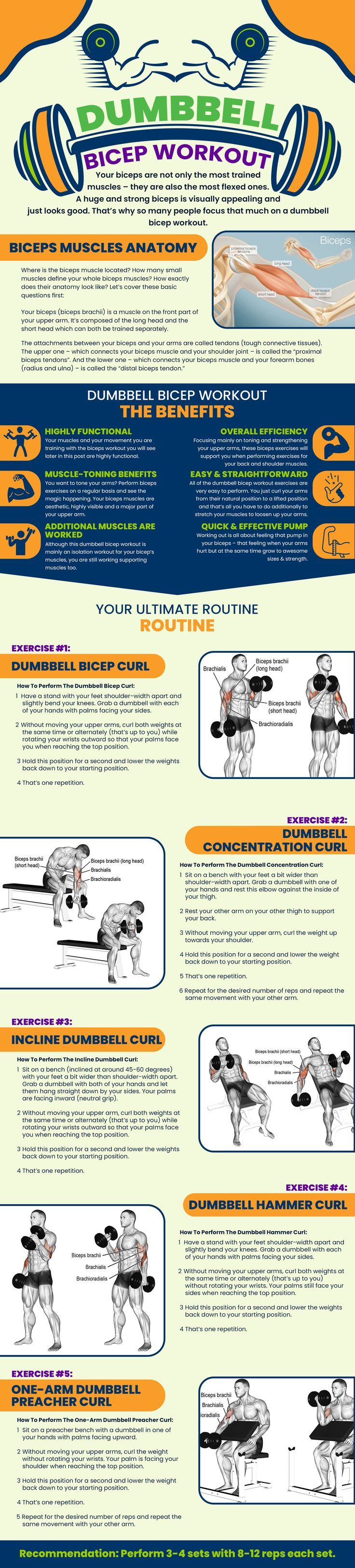 Your bicep muscle is, without a doubt, the most trained muscle in the gym – along with your chest mu...