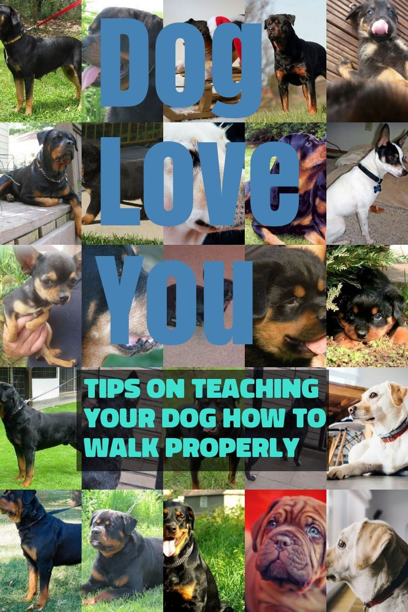 Need Good Information About Dogs Look Here Pet Care Dogs Dogs