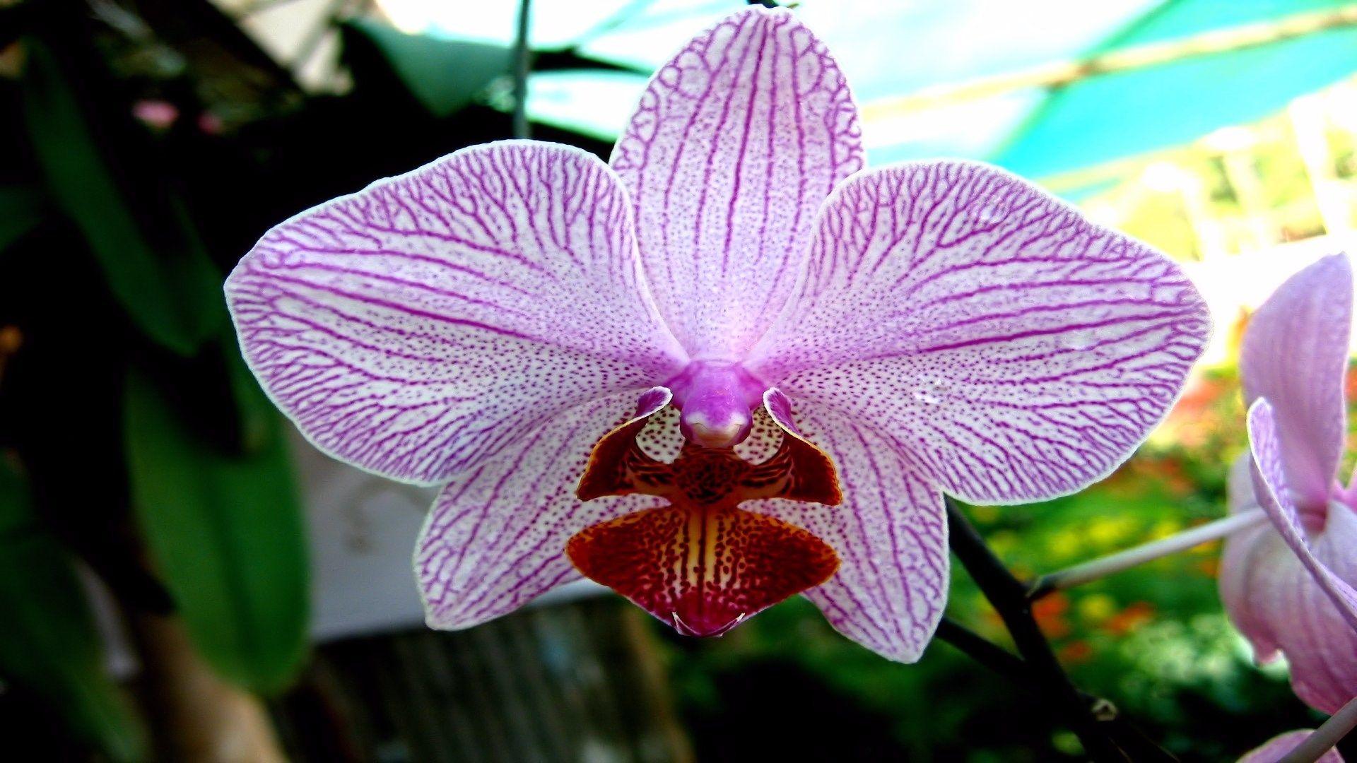Hdq images orchid pic kb berke leapman wallpaperscreator