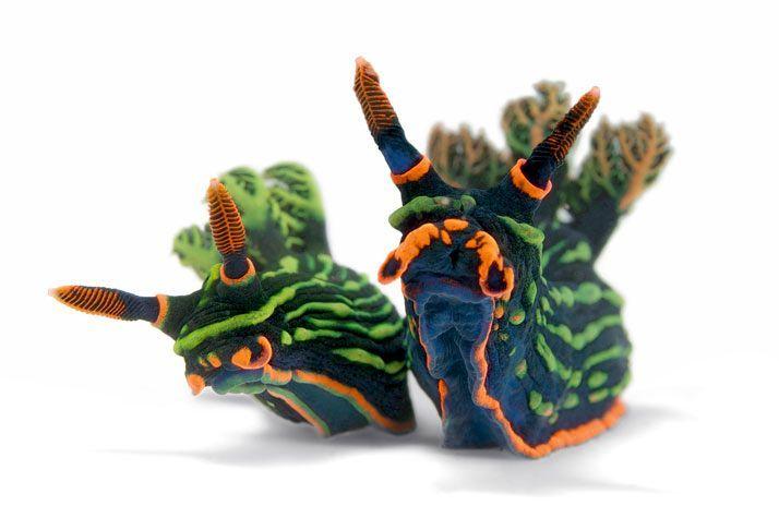 Nembrotha kubaryana, also known as the variable neon slug or the dusky nembrotha, is a species of colorful sea slug, a dorid nudibranch