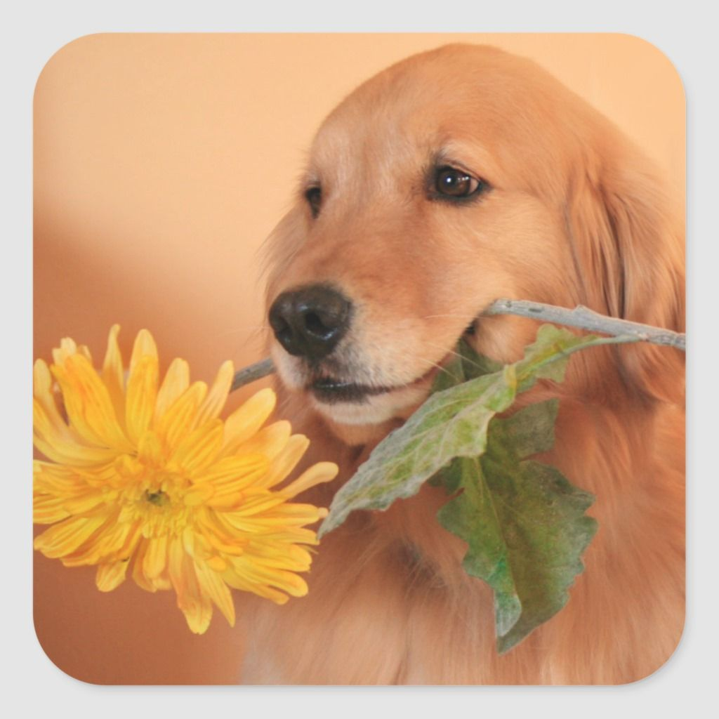 Golden Retriever With Flower Stickers Custom Stickers Dogs