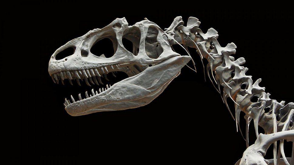 Os De Dinosaures Wallpaper Dinosaurios Fósiles De