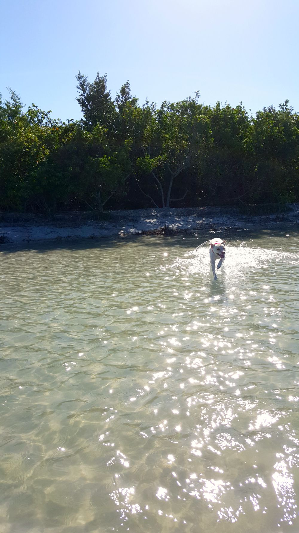 Our Visit To Bonita Springs Dog Park Aka Beach From South Southwest Blog