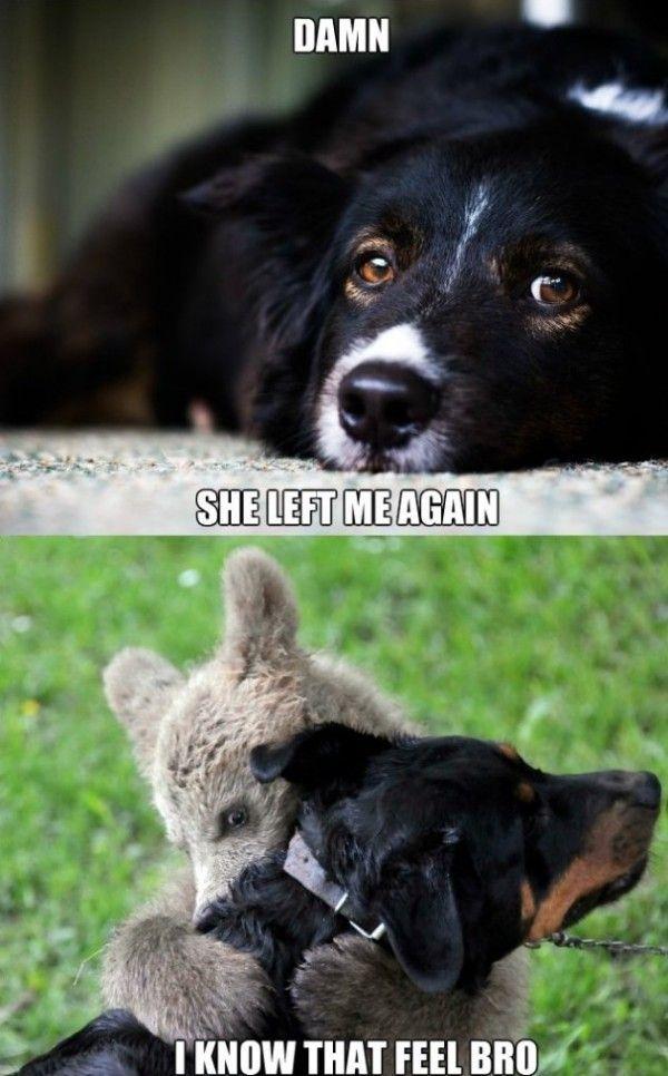 Pin On Doggie Love